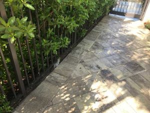 Pavers cleaned for common walk area
